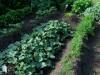 Vic Farrow's garden